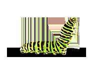 caterpil